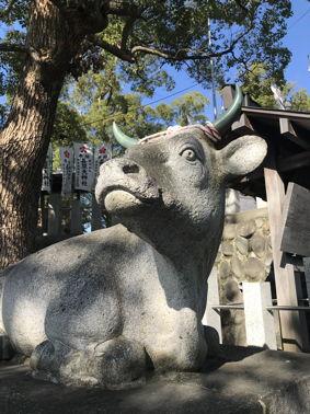 長草の牛.jpg